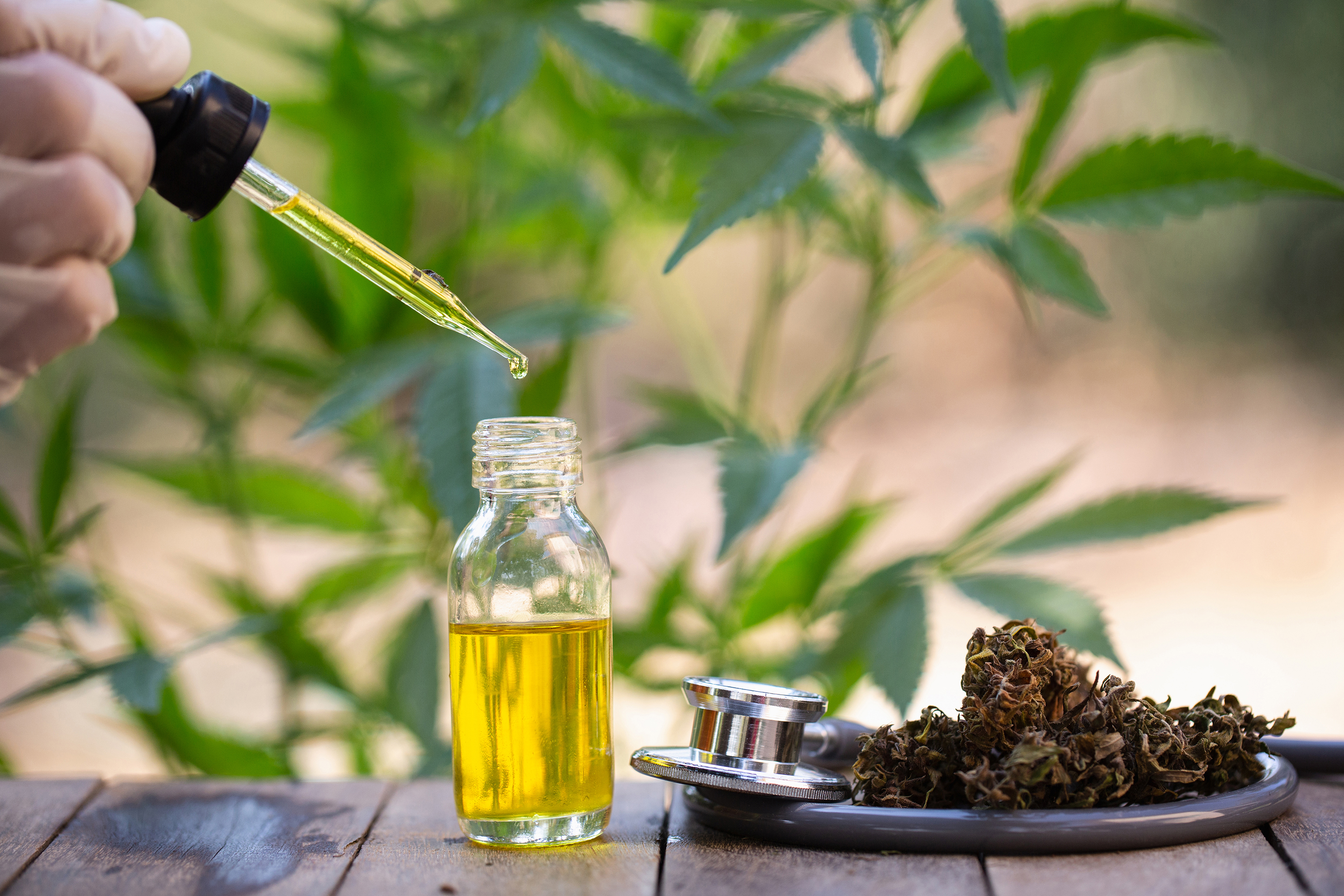 cbd oil extract